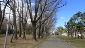 アカナラ並木
