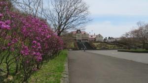 エゾムラサキツツジと旧札幌停車場