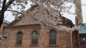 「開拓使館」と煙突とソメイヨシノ