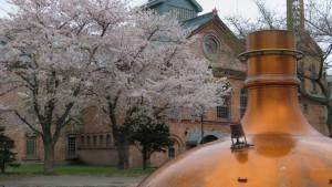 ビールの仕込み釜とビール博物館とソメイヨシノ