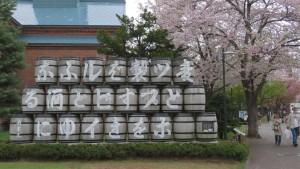 大樽とソメイヨシノ