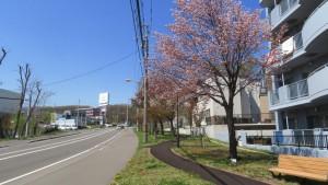 あしりべつ桜並木通り