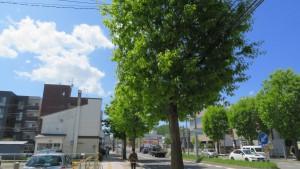 平岸通とアカナラ並木