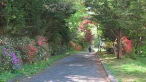 園路とツツジ