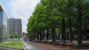 北3条広場のイチョウ並木
