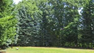 芝生広場と高木の木立