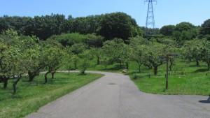 梅林と園路