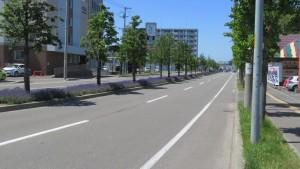 ラベンダー通りと中央分離帯のラベンダー