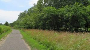 園路と「森林浴の森」