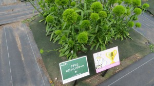 ナデシコ・レディイングリーン(緑)