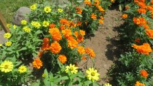 オレンジ色のマリーゴールド