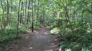 森の中の散策路(青葉中央公園)