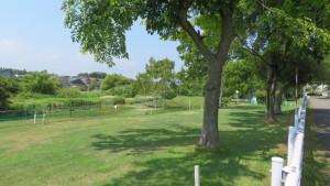 野津幌川緑地パークゴルフ場