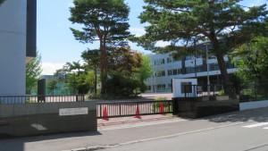 札幌第一高校とアカマツ