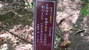 万葉歌碑(マユミ)
