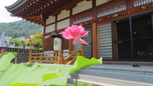 本堂とハスの花