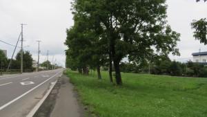 市道山本線とヤチダモの並木