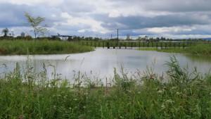 ビオトープ内の池