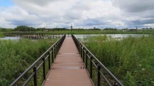 ビオトープ内の池と木道