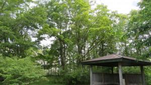 あずまやとハルニレの巨木