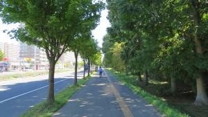 茨戸福移通とヤマモミジの街路樹