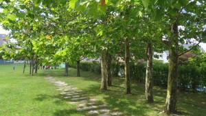 プラタナスの木立
