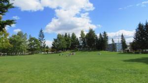 芝生広場とスキー山