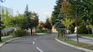 木の葉のみち(市道里塚1号線)