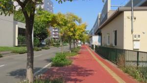 新琴似駅西通とハルニレ並木の黄葉