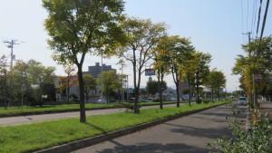 東15丁目屯田通とハルニレの黄葉