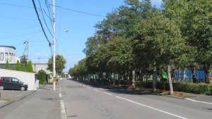 篠路公園通とオオバボダイジュ並木