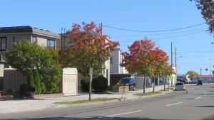 上篠路循環道と紅葉したナナカマド並木