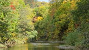 豊平川河岸の紅葉