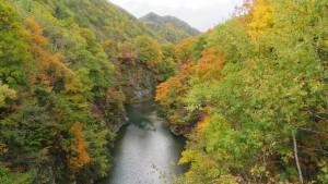 錦橋から豊平川上流の紅葉を望む