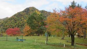 三笠緑地と紅葉