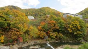 豊平川右岸の紅葉