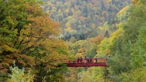 二見吊橋と山の紅葉を望む