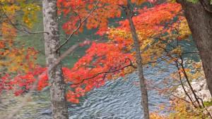 豊平川に懸かる紅葉