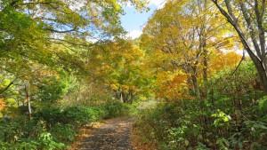 「二見定山の道」の紅葉
