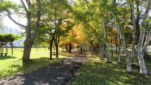園路と紅葉