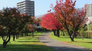 園路とサクラの紅葉