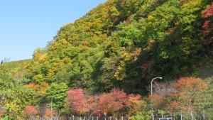琴似発寒川の断崖と紅葉