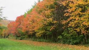 花見広場の紅葉