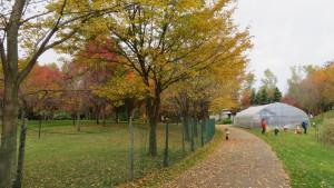 パークゴルフ場と紅葉