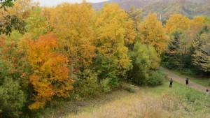 見晴らし山から園内の紅葉を望む