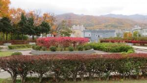 中央広場とニシキギの紅葉