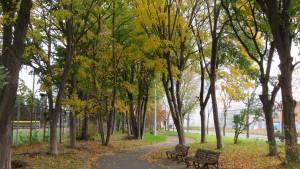 「前田公園」園路と紅葉