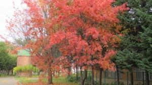 ナナカマドの紅葉とサイロ
