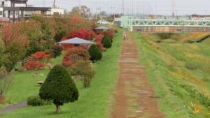 軽川桜づつみの紅葉