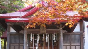 社殿とヤマモミジの紅葉
